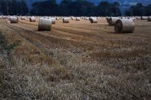 Fares Fares: Haystacks