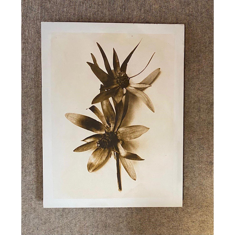 """Don Freeman """"Herbier"""", photographie virage sépia sur plâtre, 1993. 1/3, 53.5 X 40.5 cm (courtesy of Jacques Grange)."""