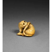 ~ NETSUKE  en ivoire de belle patine, en forme de tigre se mordant la queue, les yeux incrustés de corne brune, les détails de son...