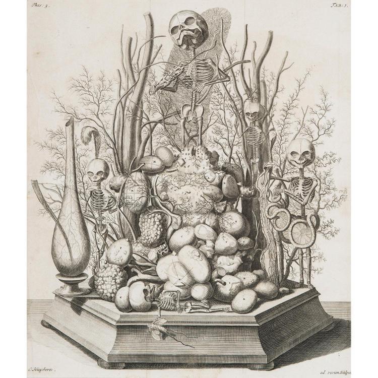 CORNELIS HUYBERTS (1669-1712) PLANCHES issues de l'ouvrage d'Anatomie de F. Ruysch, Thesaurus Anatomicus Primus. Eau-forte....
