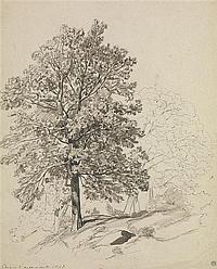 Auguste ANASTASI (1820 - 1889) Etudes d'arbres dans les gorges d'Apremont, 1843 Plume et encre brune, lavis brun sur traits de crayo...