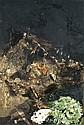 Paul Rebeyrolle (1926-2005) La punition (Natures mortes et pouvoir), 1975 Technique mixte sur toile Mixed media on canvas 195 x 130 ...