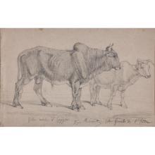 Henri REGNAULT (Paris 1843- Rueil-Malmaison 1871) Étude pour deux zébus