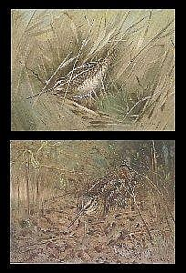 Allen William Seaby (1867-1953) A WOODCOCK NESTING AMONGST BRACKEN; A BIRD AMONGST REEDS, POSSIBLY A WOODCOCK OR SNIPE Signed, pencil and watercolour heightened with white, {28.5cm by 39. 5cm (11.25in by 15. 5in)} (a pair) (2)