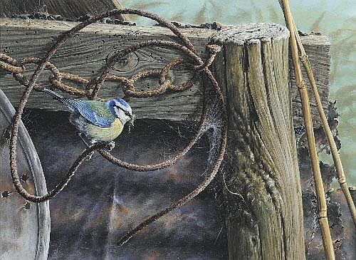 Alan M. Hunt (b.1947) Blue Tit beside a cobweb on