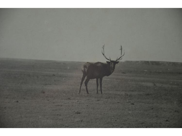 ORIGINAL ELK 1897 PHOTOGRAPH GEORGE R COLLINS