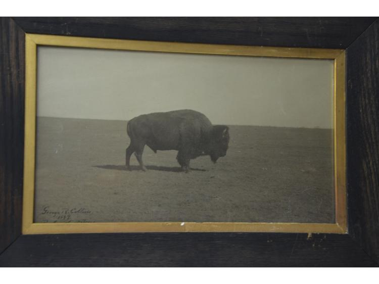 ORIGINAL BUFFALO 1897 PHOTOGRAPH GEORGE R COLLINS