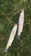 Pair of Hand Carved & Painted Wood Fish Figures