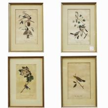 4 Framed Audubon Book Plates   6