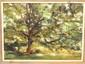 OOC E A Marton Tree Scene