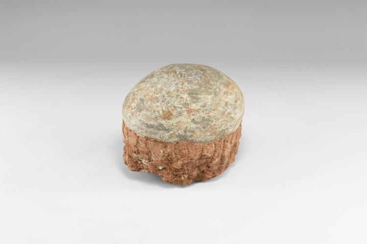 Natural History - Hadrosaur Fossil Dinosaur Egg