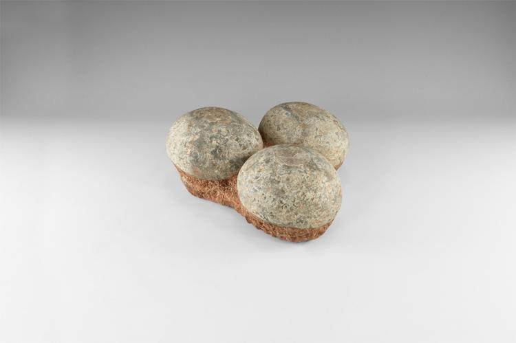 Natural History - Hadrosaur Fossil Dinosaur Egg Group
