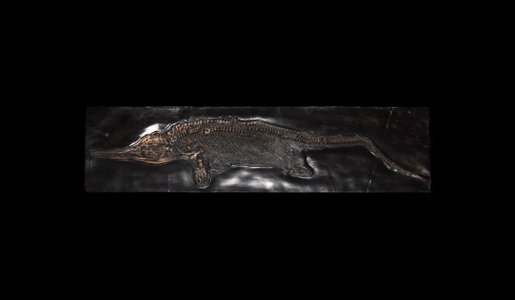 Natural History - Complete Ichthyosaur Skeleton Replica.