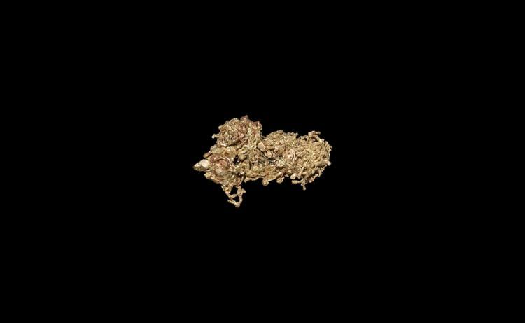 Natural History - Native Gold Mineral Specimen.