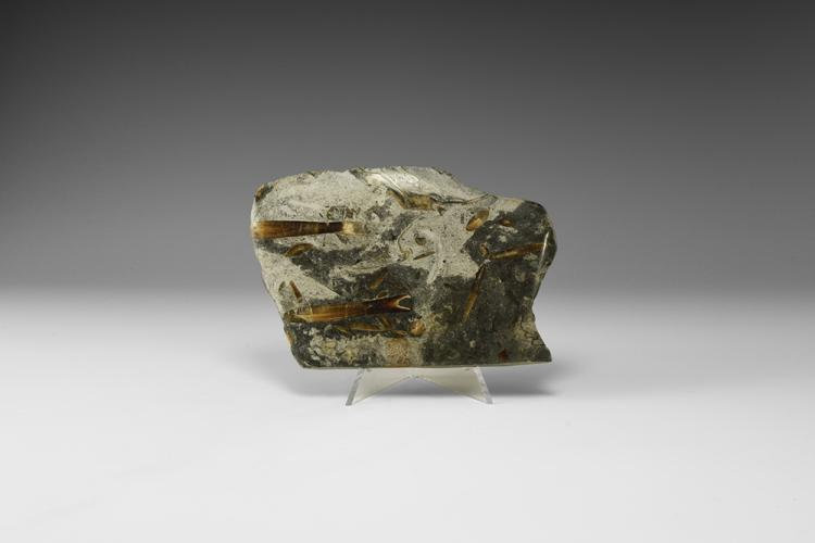 Natural History - Historic Lyme Regis Belemnite Fossil Specimen