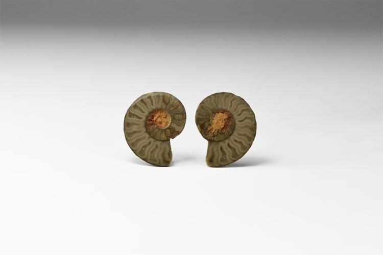 Natural History - Polished Ammonite Fossil Specimen Pair