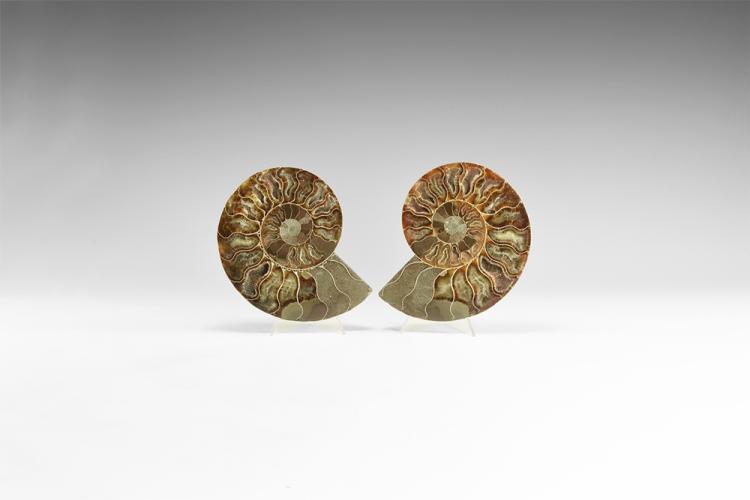 Natural History - Cut & Polished Fossil Ammonite Pair