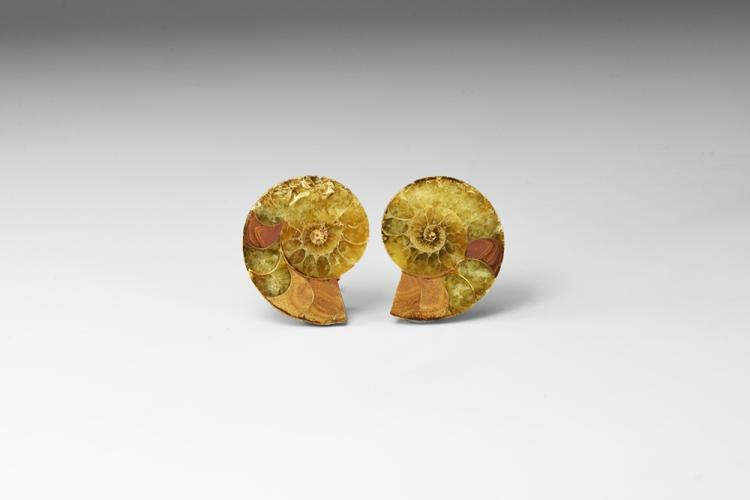 Natural History - Polished Ammonite Fossil Pair