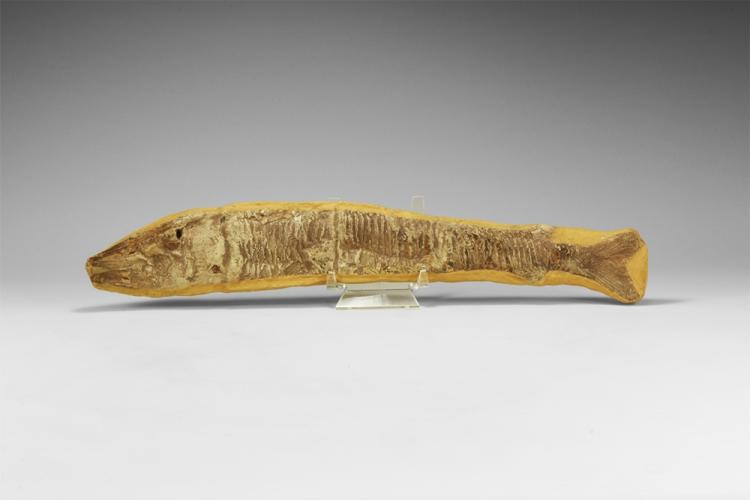 Natural History - Vinctifer Fossil Fish