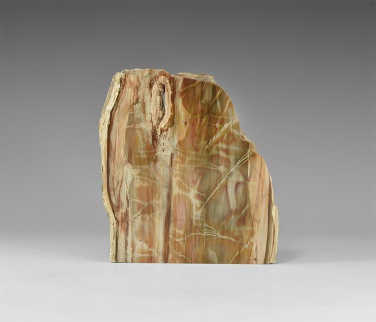 Natural History - Polished Fossilised Wood Slice