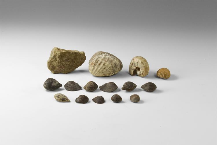 Natural History - Historic Mixed Fossil Group