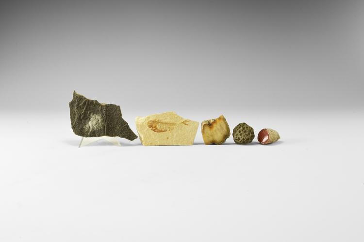 Natural History - Historic USA Fossil Group.