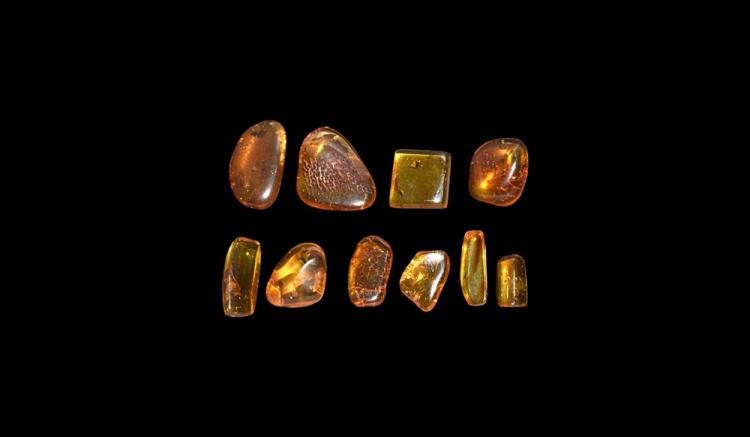 Natural History - Insects in Baltic Amber