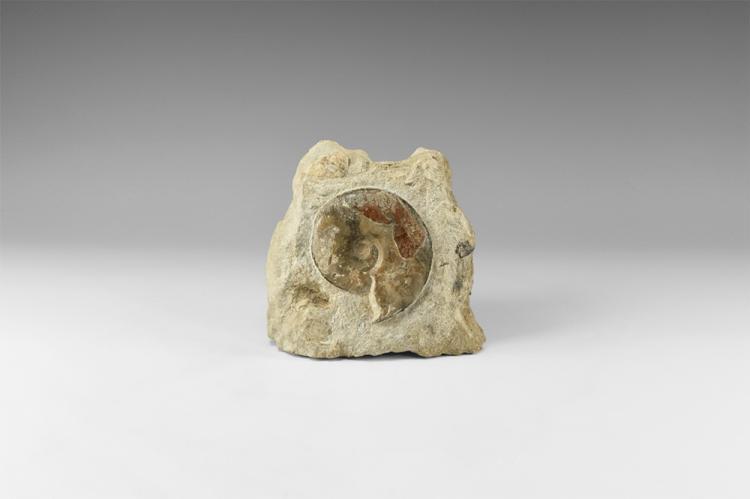 Natural History - British Fossil Ammonite