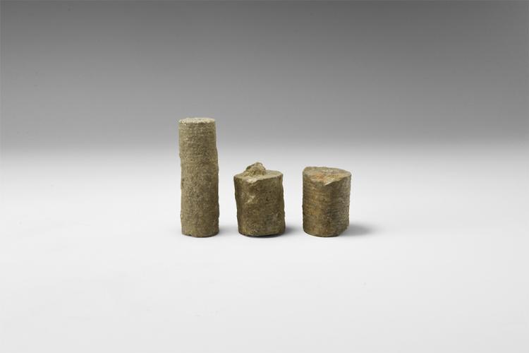 Natural History - Historic Crinoid Fossil Group