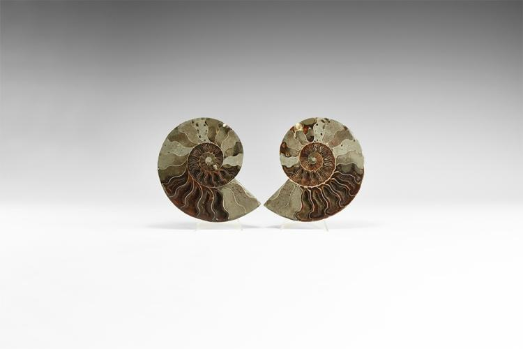 Natural History - Cut & Polished Fossil Ammonite Pair