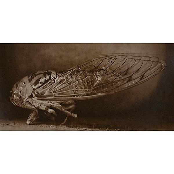 David Halliday (American, b. 1958) Cantaloupe and Scissor and Cicada