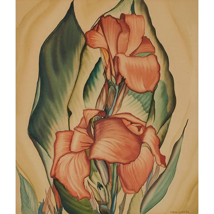 Sidney W. Seeley, (American, 20th century), Cannas, watercolor, 15.5