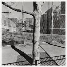 Lee Friedlander: New York City
