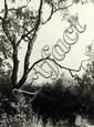 Renger-Patzsch, Albert1897 Würzburg - 1966 WamelBirkenast und Elbinseln. 1928. Vintage. Gelatinesilberabzug. Passepartout. 22,8 x 16,9cm (23,1 x 17,2cm). Rückseitig Atelierstempel des Photographen sowie von Renger-Patzsch mit Bleistift Nummernvermerk