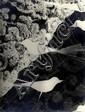Horn, Hilde1897 Köln - 1943 Krailling (Starnberg)Photogramm mit Spitze und Vögeln. 1920er Jahre. Vintage. Gelatinesilberabzug. Agfa-Brovira. Passepartout. 23,7 x 17,8cm Rückseitig mit Bleistift Sammlungsvermerk. Bildecken bestoßen. Minimale