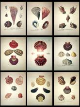 SHELL COLLECTIONS - ORIGINAL 18th Century Gifts from the Sea - NINE (9) PIECES
