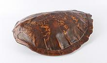A turtle differs, 1900,