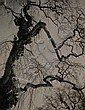 Dirk de Herder (1914-2003), silver gelatin print,, Dirk De Herder, Click for value