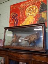 Taxidermy pheasant and squirrel mounted in a glazed case.
