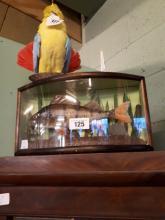 Taxidermy Bream mounted in a glazed case.