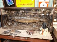 Taxidermy pike mounted in a glazed case, by James Robben Belfast. { 153cm L