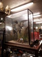 Taxidermy Mallard drake and duck mounted in a glazed case.