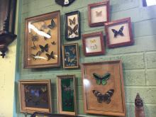 Set of nine butterflies mounted on wooden frames.