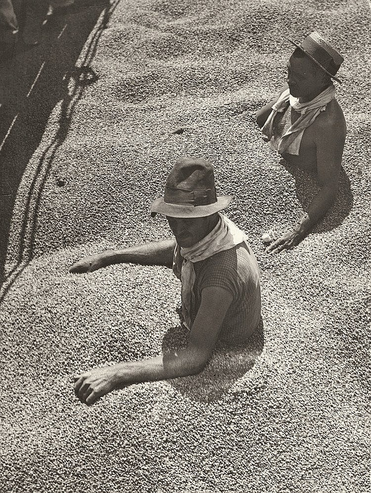 Munkácsi, Martin 1896 - 1963 Brasil, choked with coffee