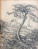 Wilhelmina van Oranje-Nassau (1880-1962) Pine tree in Den Duttel