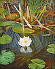 Dirk Smorenberg (1883-1960) Water lilies. Signed lower left. In t, Dirk Smorenberg, €0
