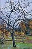 Martin van Waning (1889-1972) Fruit tree in fall. Signed lower ri, Martin