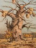 Otto Klar (South African 1908-1994) BAOBAB TREE signed oil on board 59,5 by, Otto Klar, R20,000