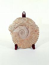 NAUTILUS FOSSIL ON STAND
