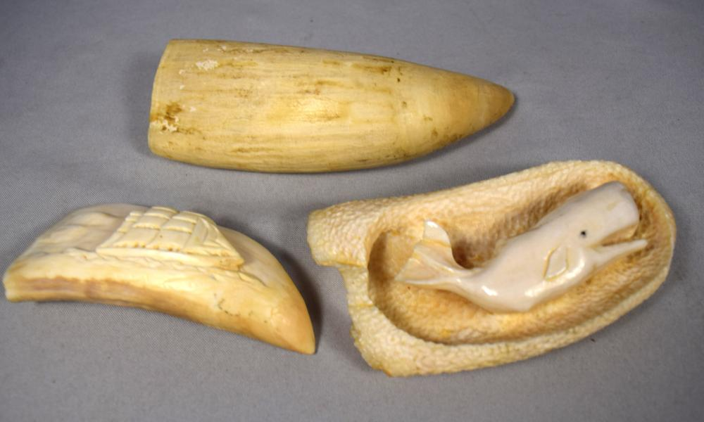 CARVED, RAW & SCRIMSHAW WHALE TEETH: